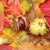 Waldorf Homeschoolers – Autumn